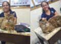 Encuentran gato gigante y lo confunden con un leopardo