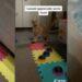 Gato logra comunicarse con sus dueños con ayuda de unos dispositivos de voz