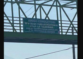 """Llaman """"animales"""" a las personas que no usan puente peatonal"""