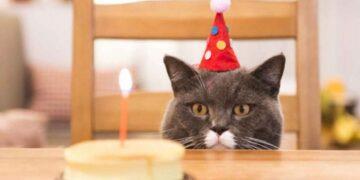 La dueña del gato fue el caso índice del brote de Covid-19